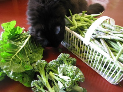 Broccoli and Swiss Chard and Beans, Oh My!